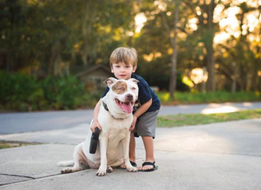 pit bull DNA test