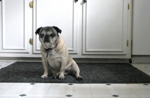 dog_proof_kitchen_640x420.jpg