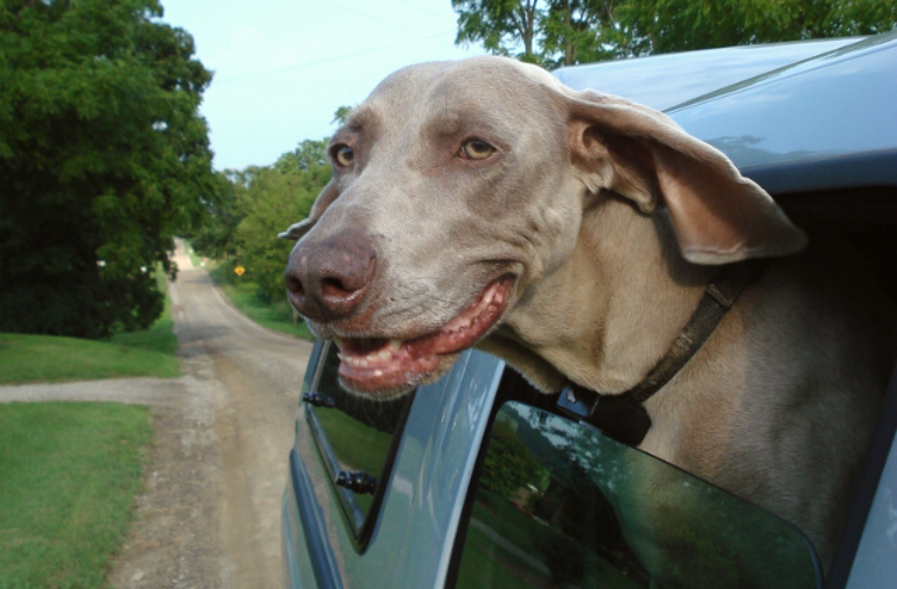 Pet Car Hammock >> 8 Gadgets For a Dog Friendly Road Trip | Healthy Paws