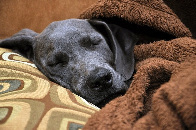 At Home Treatments For Pet Colds Healthy Paws Pet Insurance