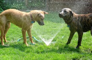 dog_sprinklers_640x420.jpg