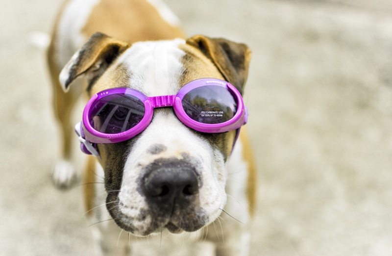 doggles dog clothes