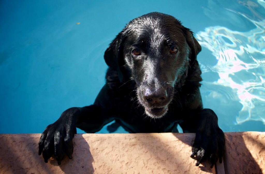 Build A Diy Dog Pool To Keep Pups Cool