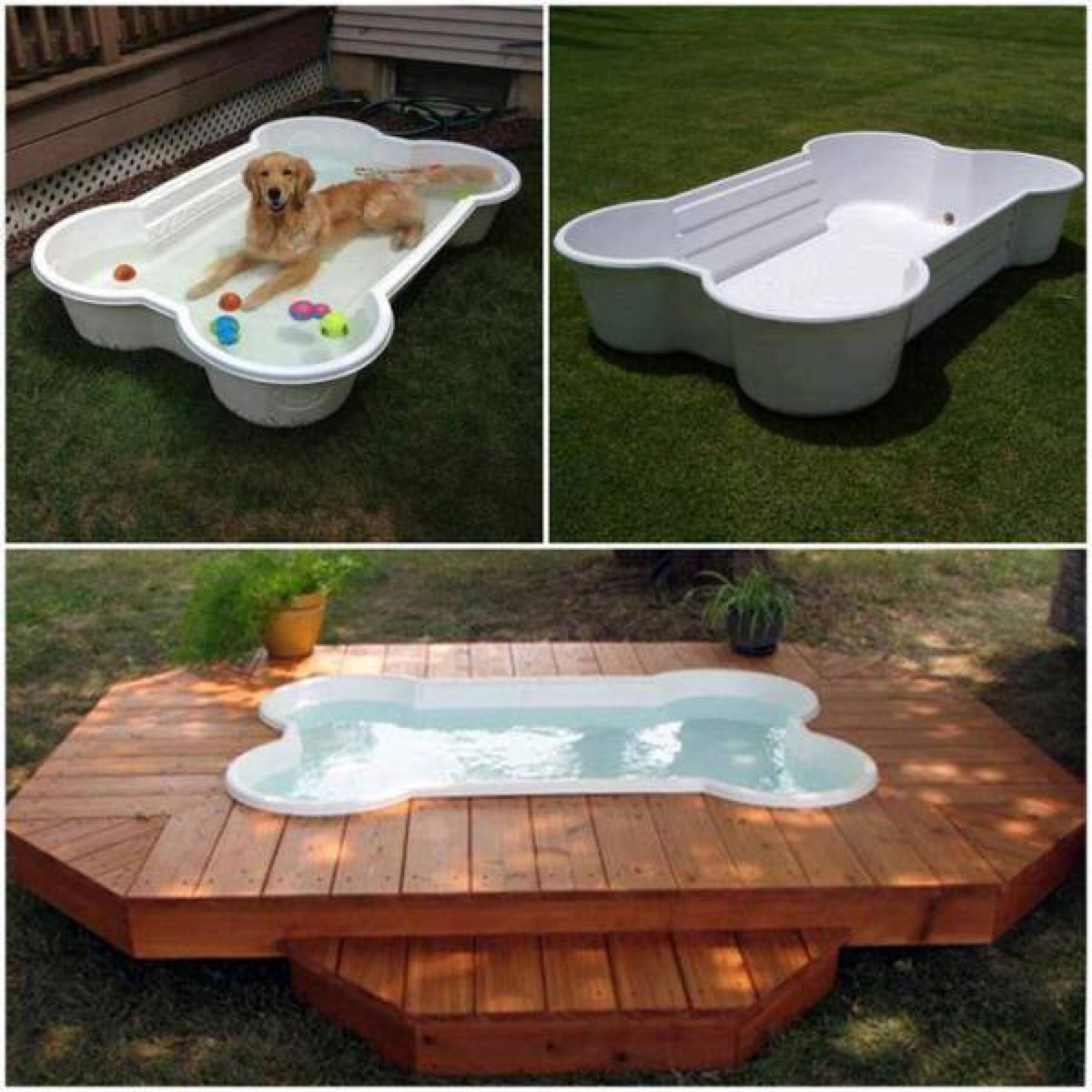 Build a diy dog pool to keep your pup cool healthy paws dog bone swimming pool and deck solutioingenieria Choice Image