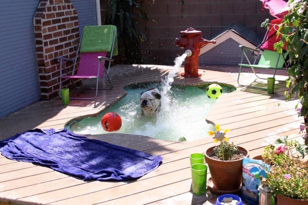 dog swimming pool fountain