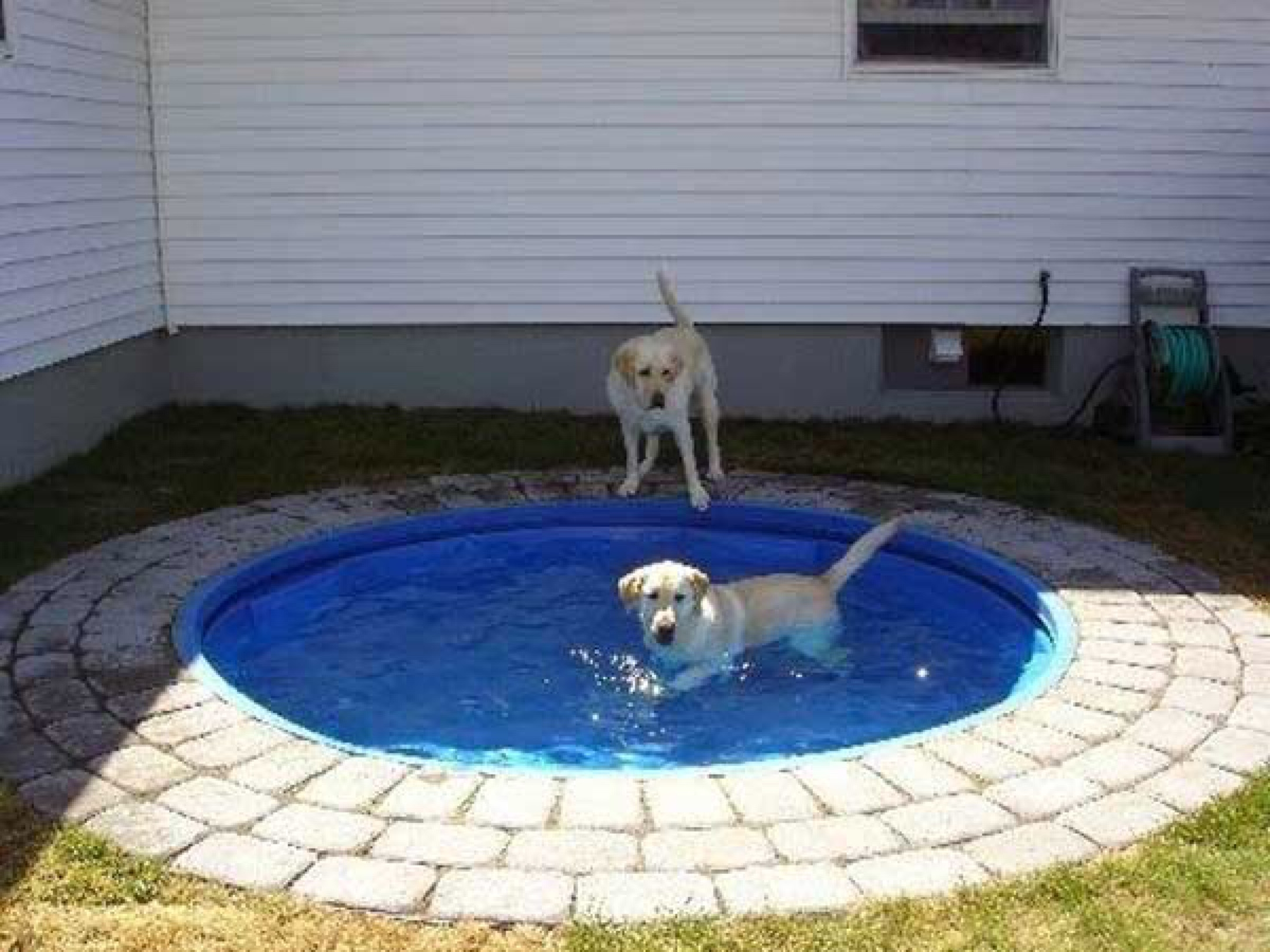 Cement Backyard Dog : Keep Your Dog Cool with these DIY Dog Pool Ideas