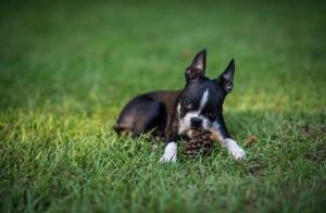 dog_yard_640x420.jpg