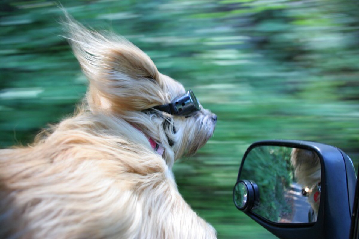 8 Gadgets For A Dog Friendly Road Trip Healthy Paws Pet