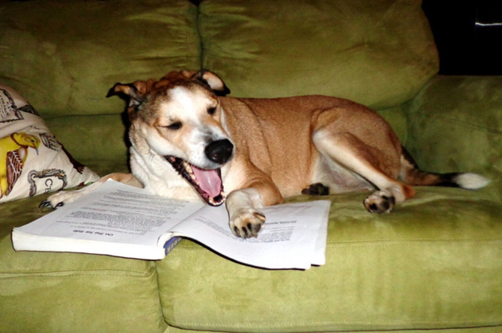 dogs reading