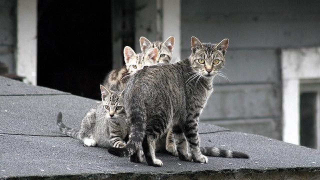 Feral Cats Become Pets