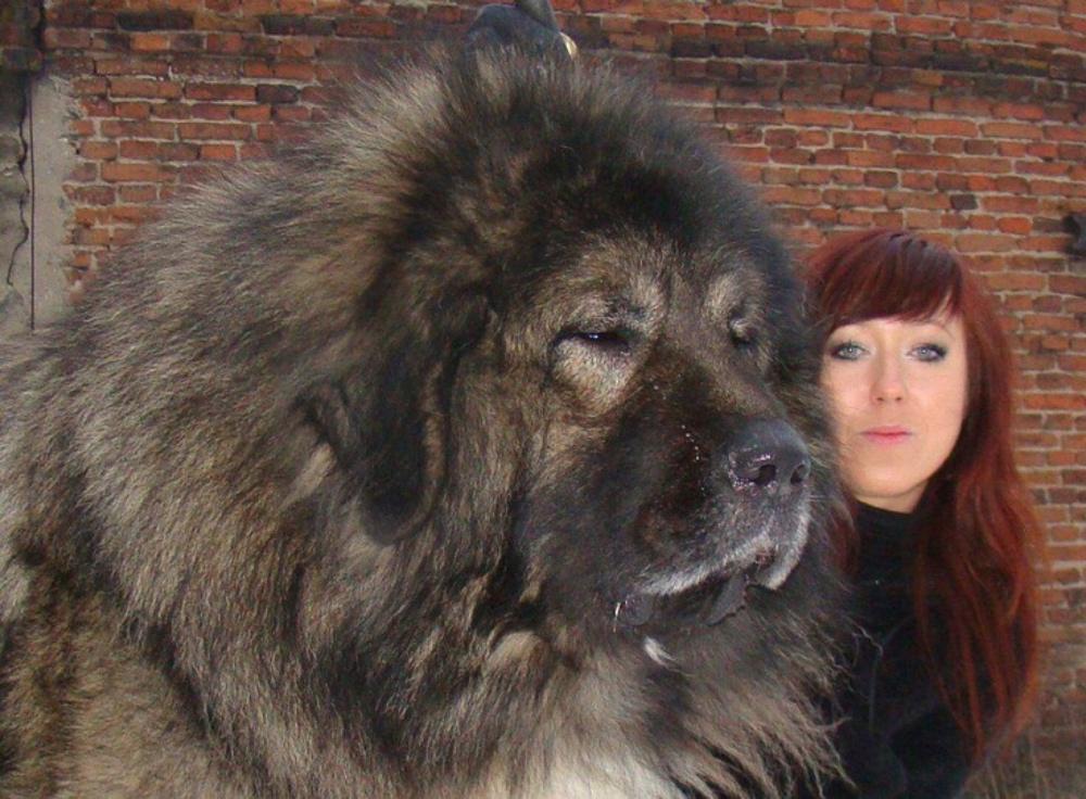 Russian Caucasian dog