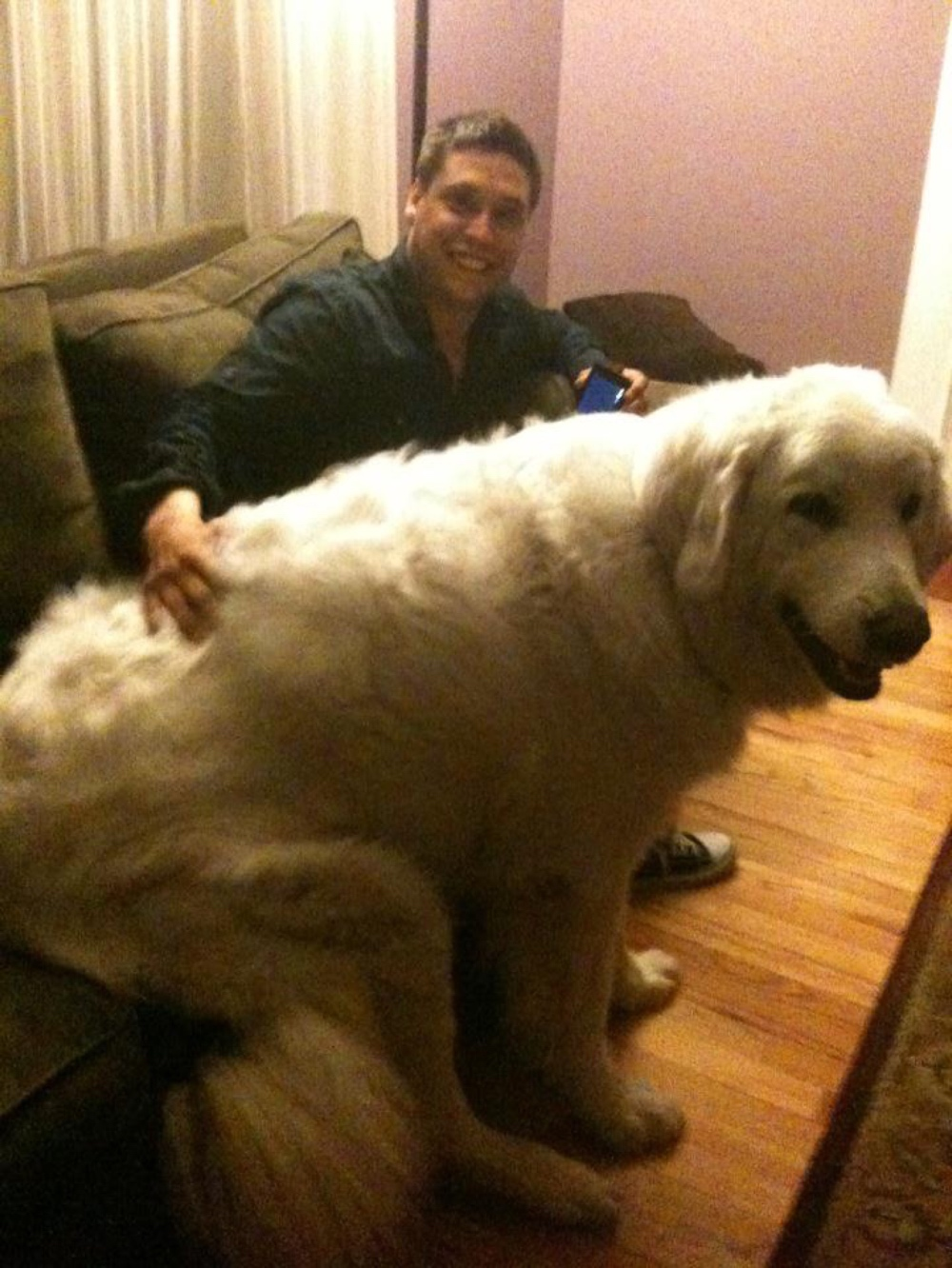 Giant dog on couch