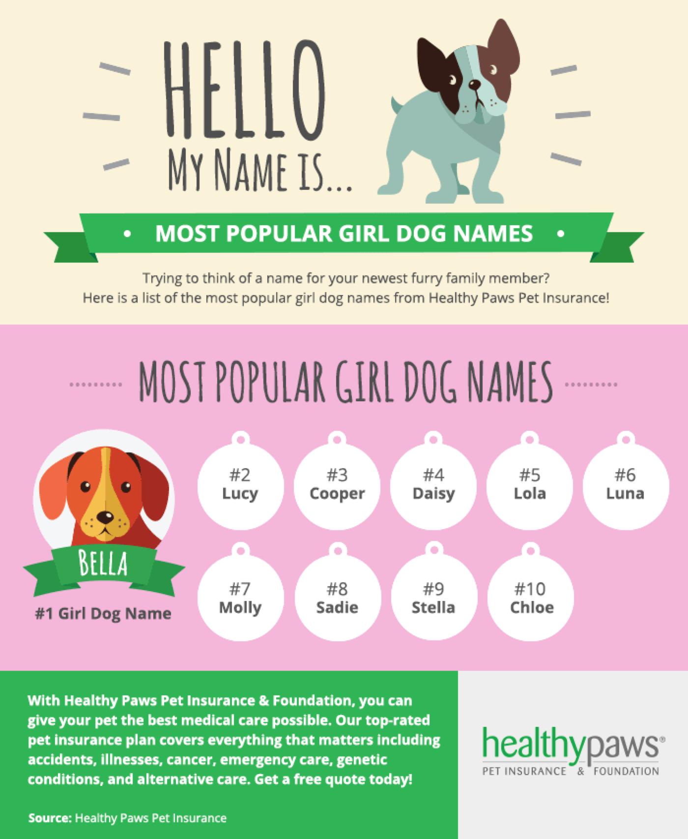 Best Pet Names For Girlfriend: Most Popular Girl Dog Names