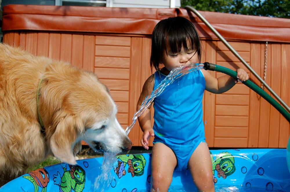 golden retriever best dog breeds for kids