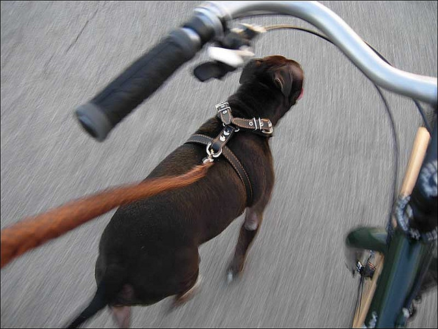 bicycle dog leash