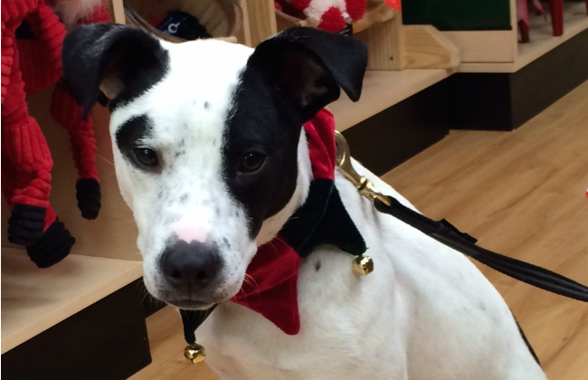 rescue dog christmas