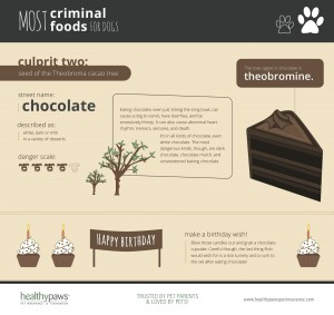healthypaws_chocolate