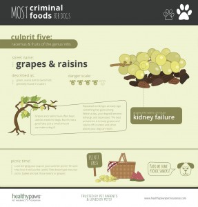 healthypaws_grapes
