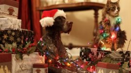 healthy paws pet holidays