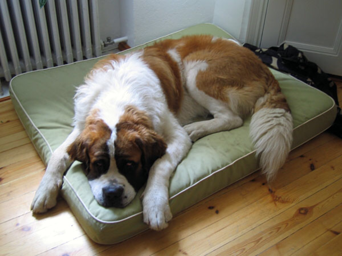 Find Your Picky Pup the Perfect Dog Bed : Healthy Paws Pet Insurance