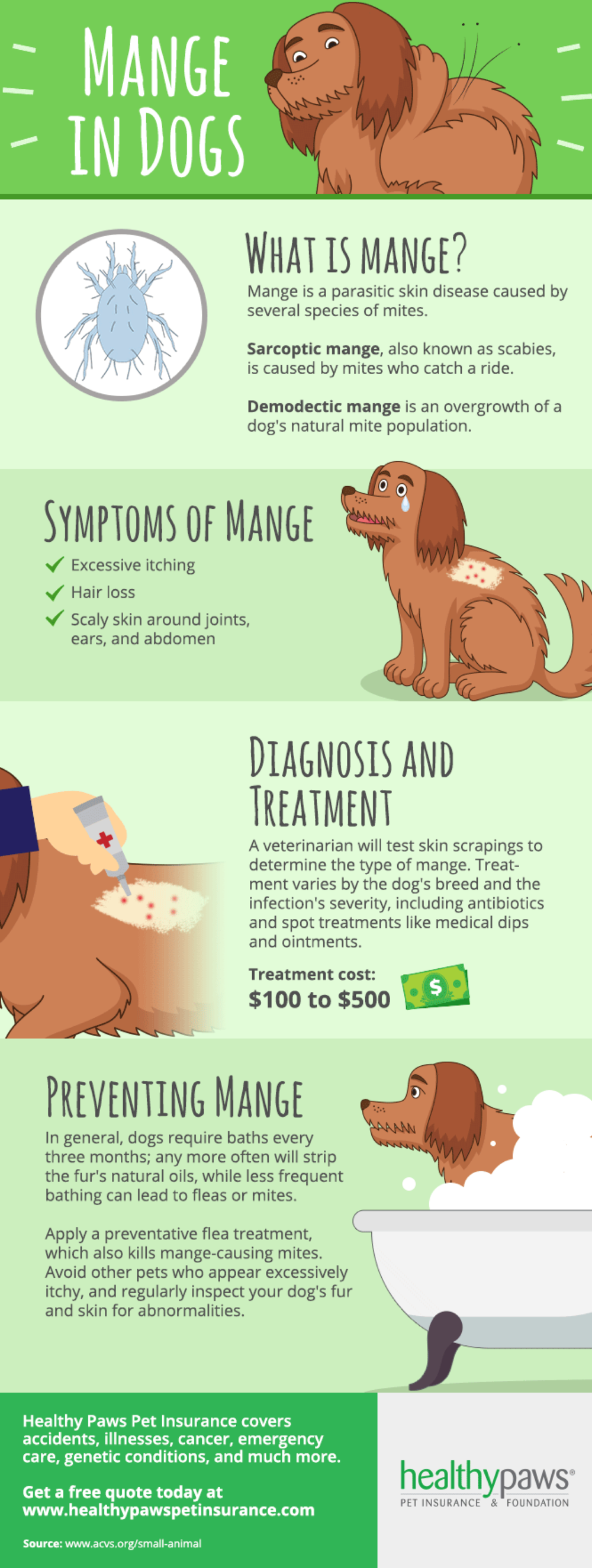 mange in dogs infographic