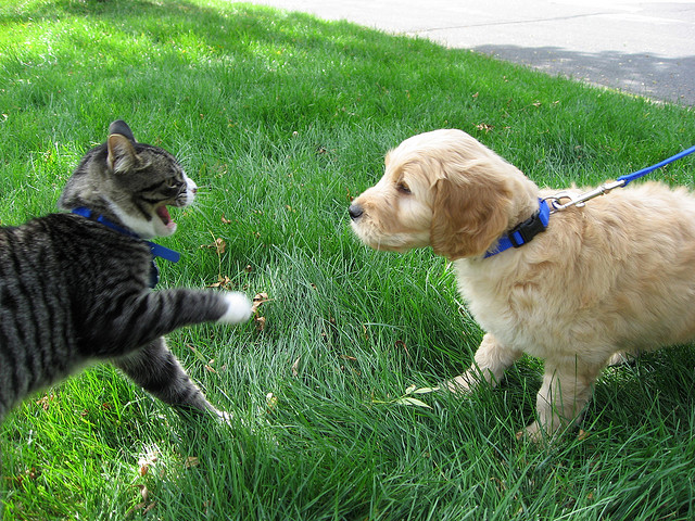dogs cats fighting