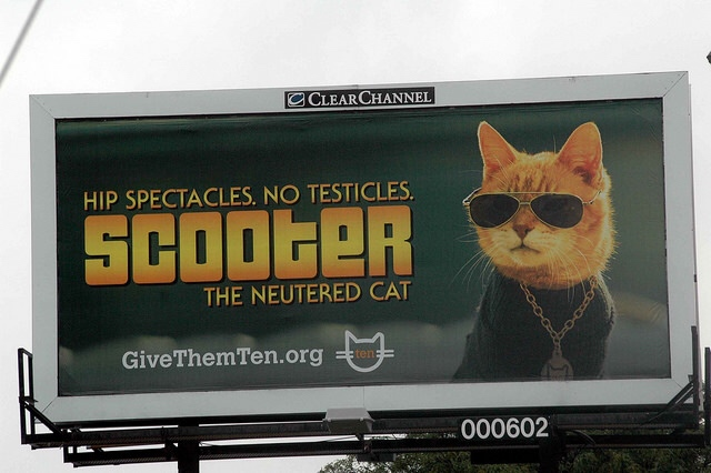 cat neuter billboard