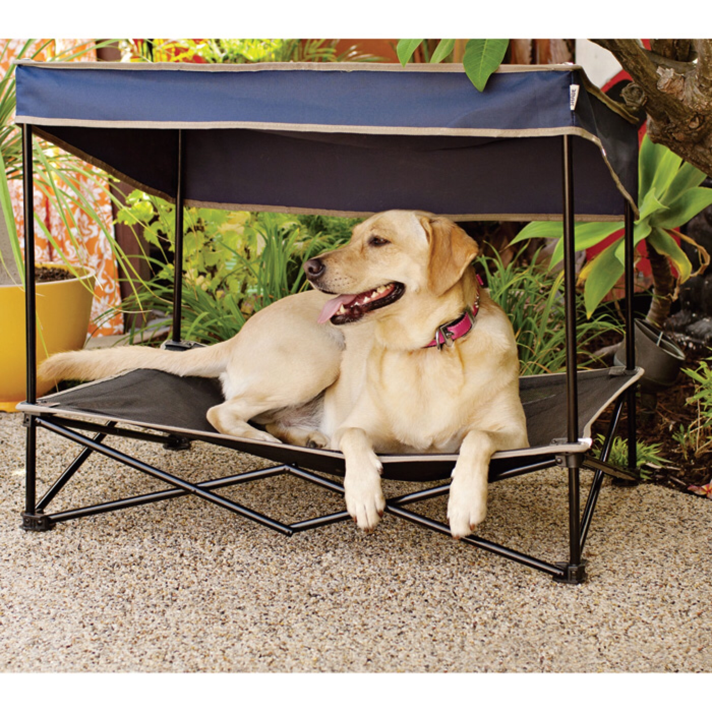 Inspirational Cheap Dog Beds Image Of Bed Accessories