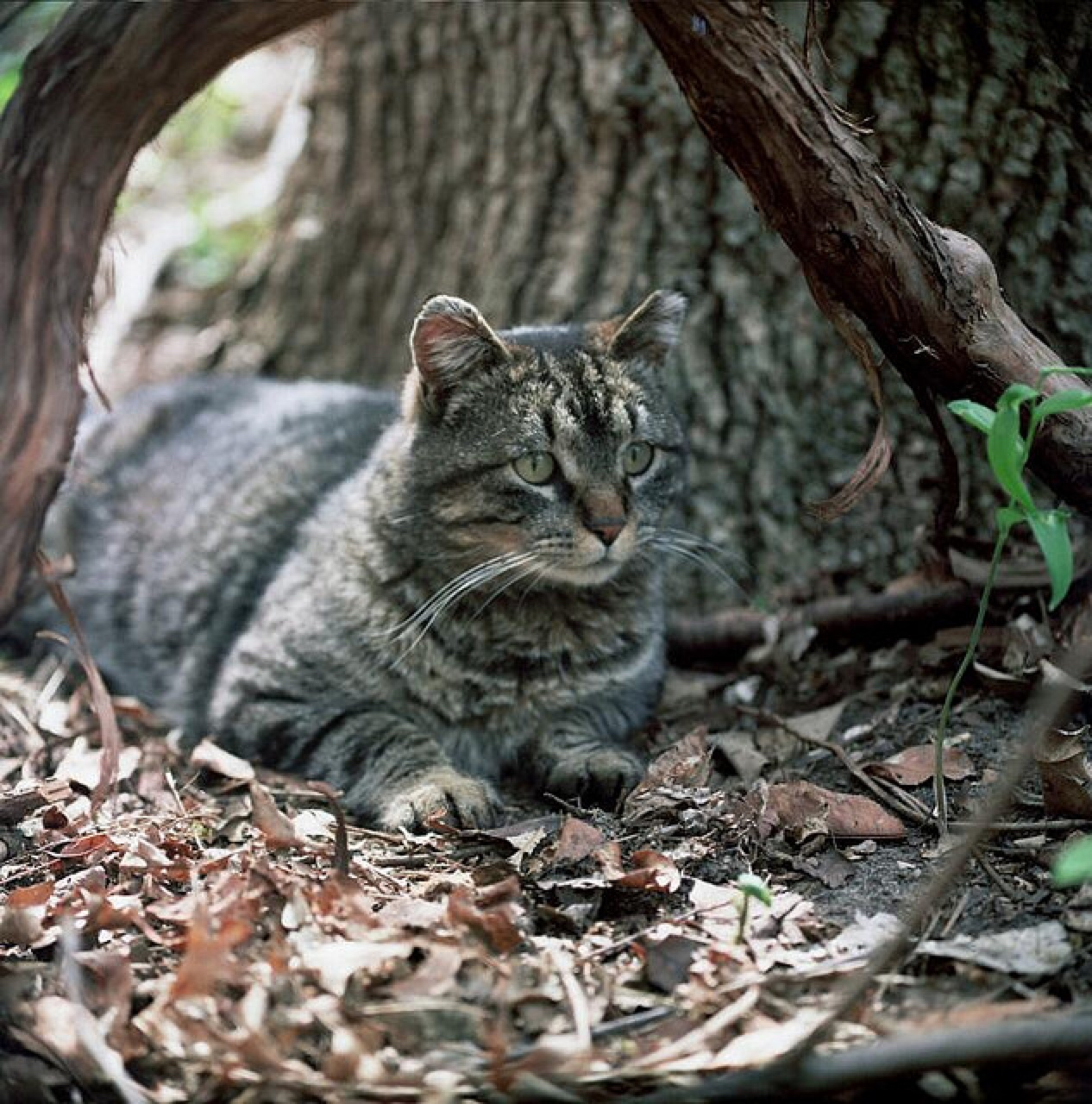 How To Keep Outdoor Cats Healthy
