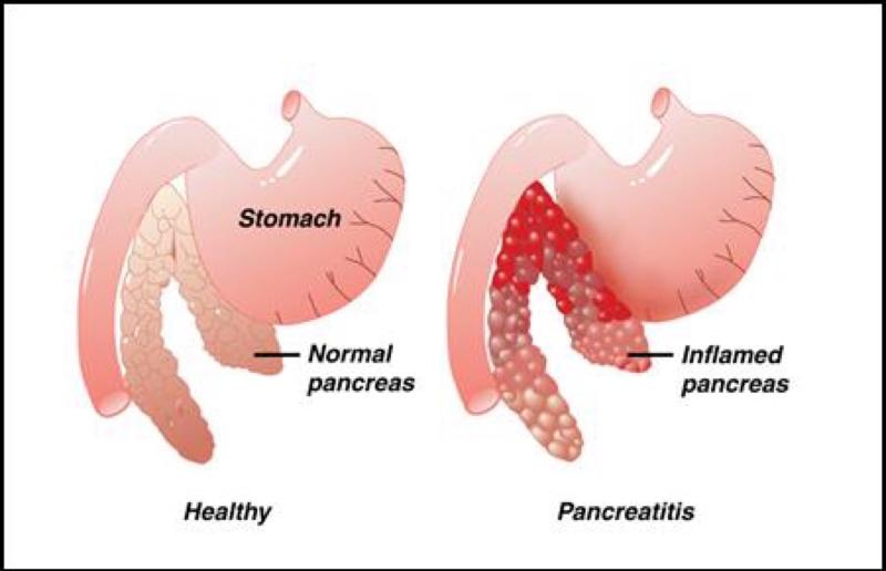 Natural Treatment Pancreatitis Dogs
