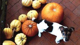Pumpkin dog treat recipes