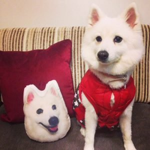 pet-photo-pillow
