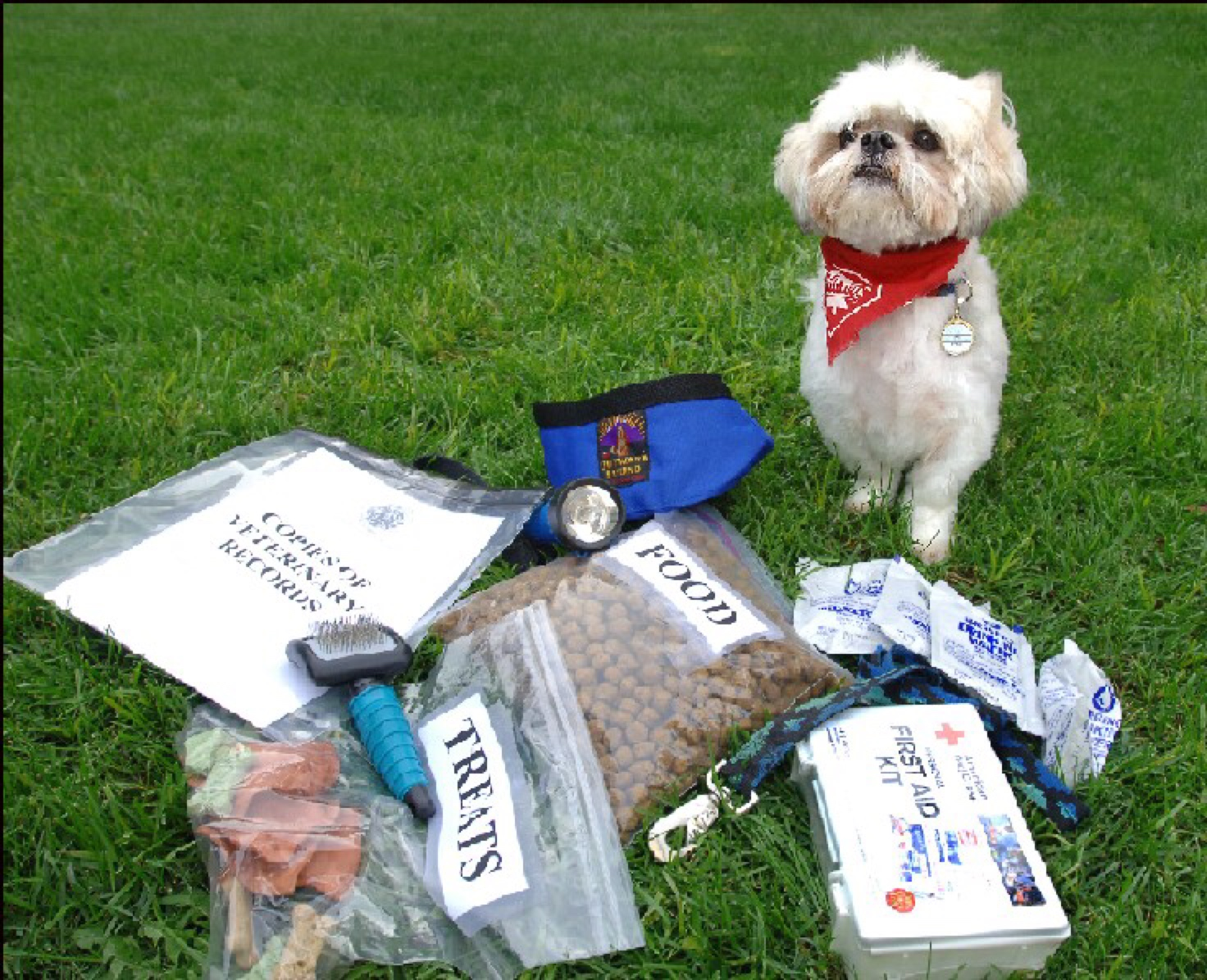 pet first aid kid disaster preparedness