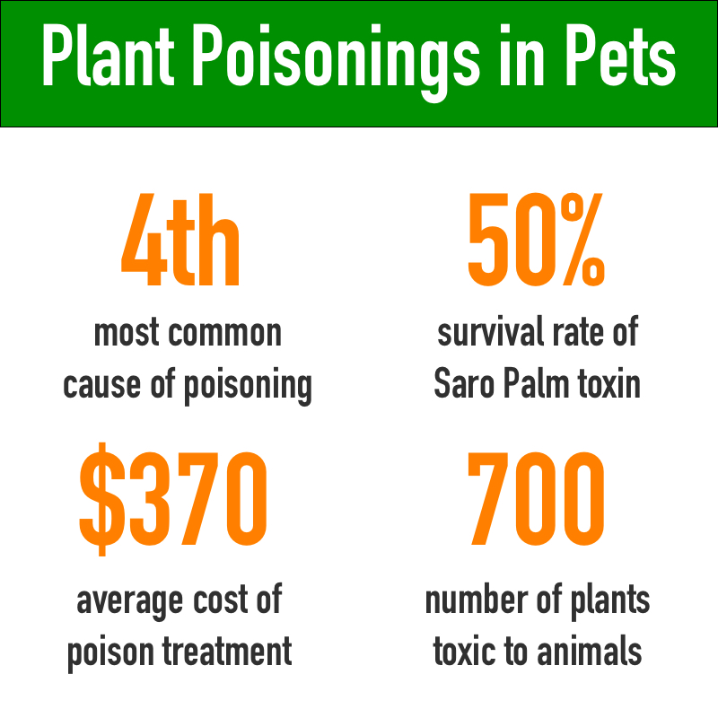 plants poisonous to cats and dogs