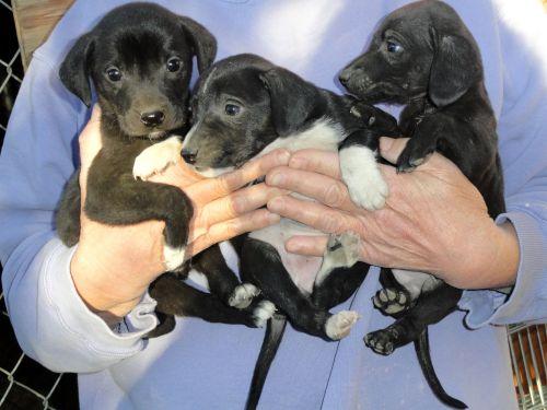 Yakima Dog Rescue
