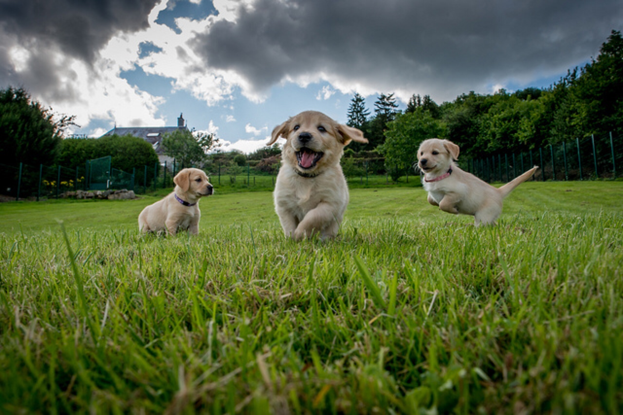 puppy party field day