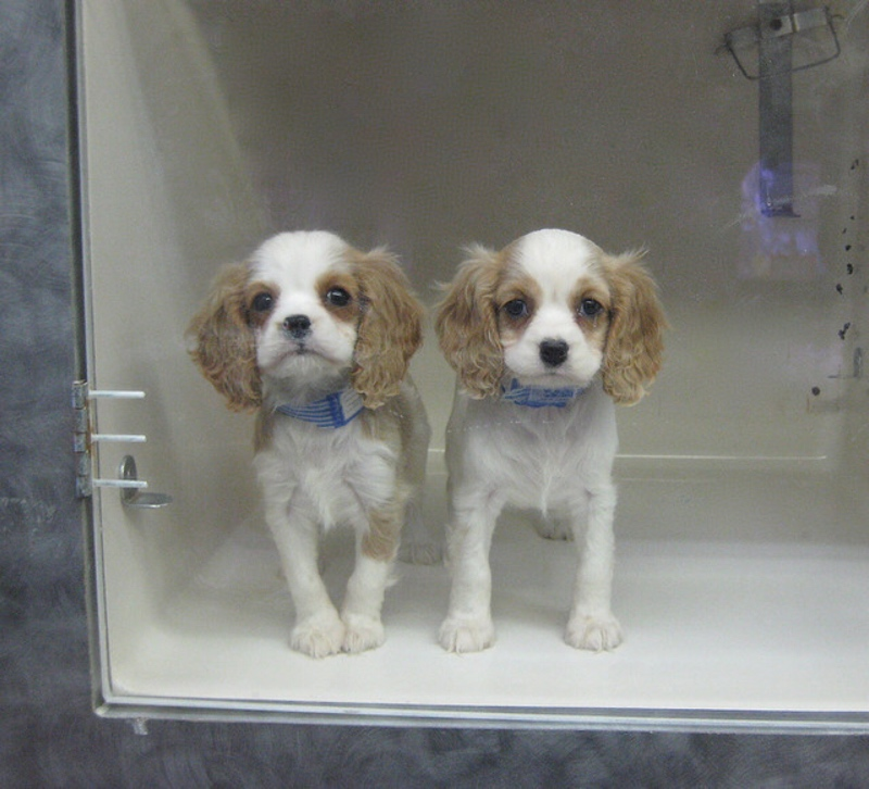 puppy mills action week