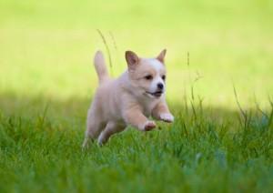 puppyfeature