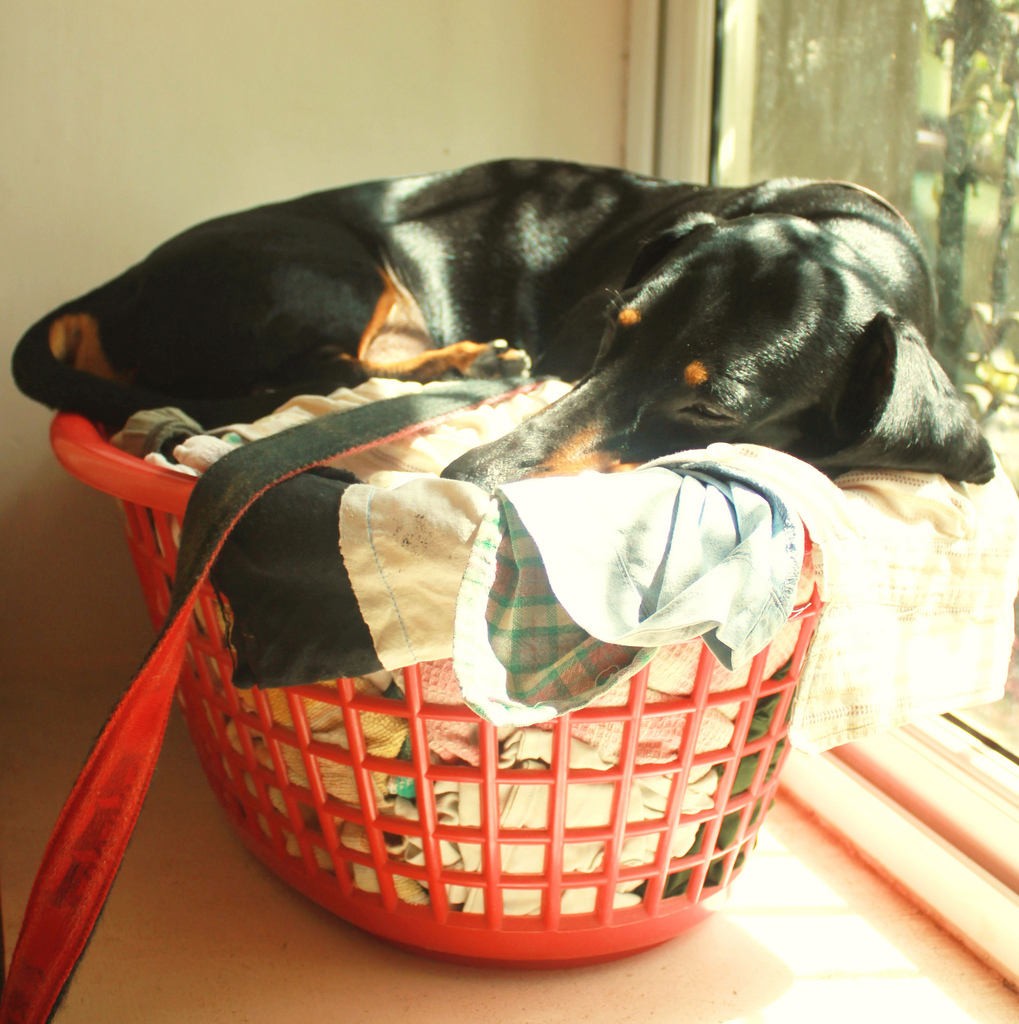 Separation anxiety dogs medication