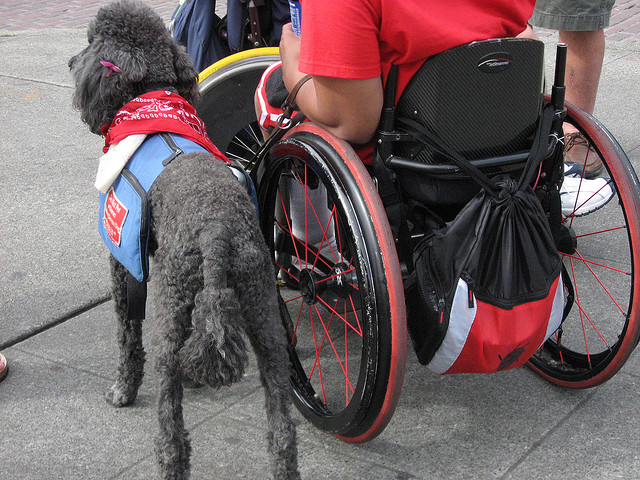 service dog wheelchair