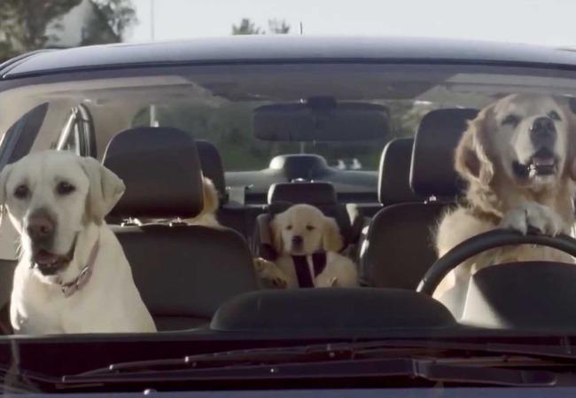 Subaru dogs driving