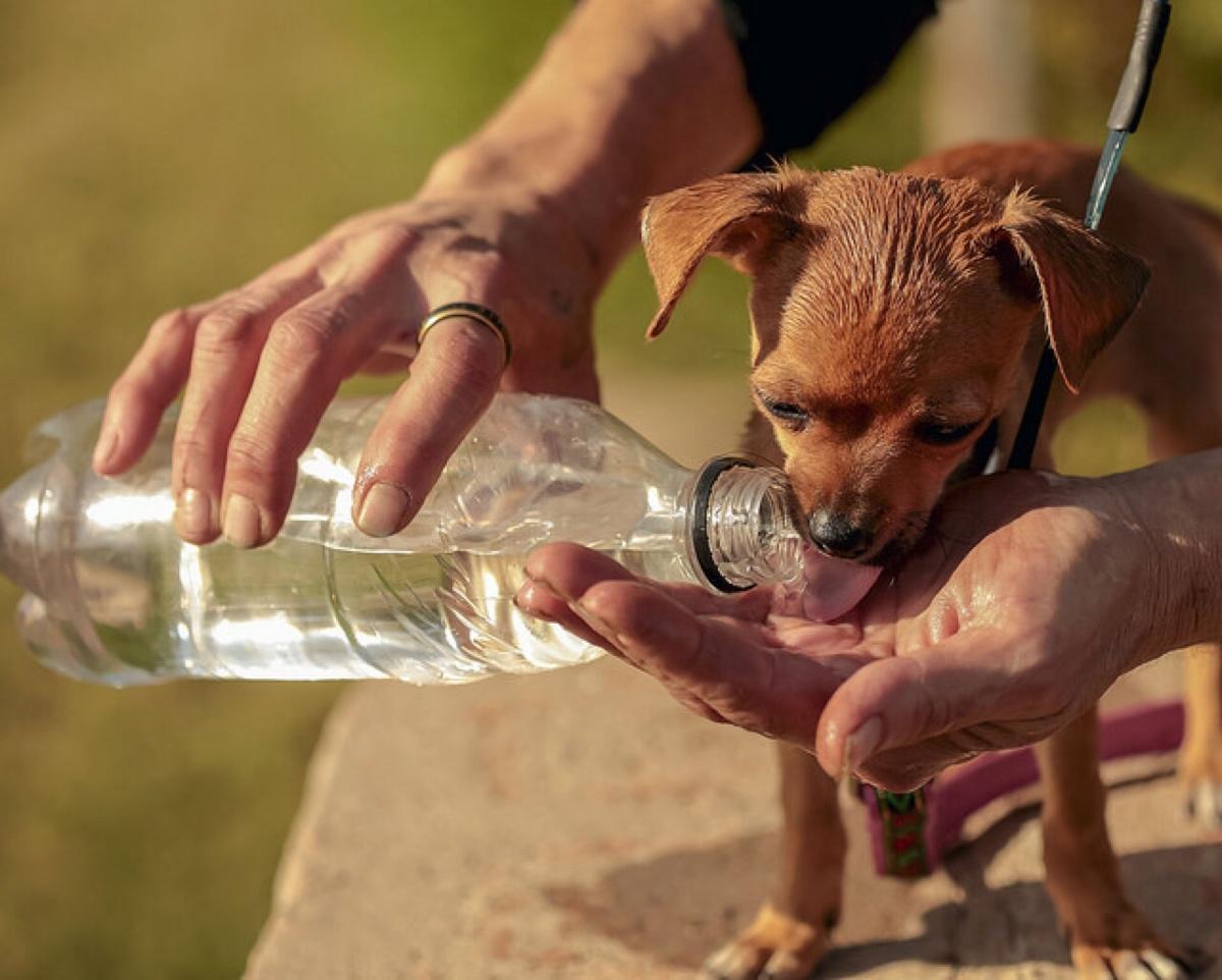 Почему собака не пьет воду только ест