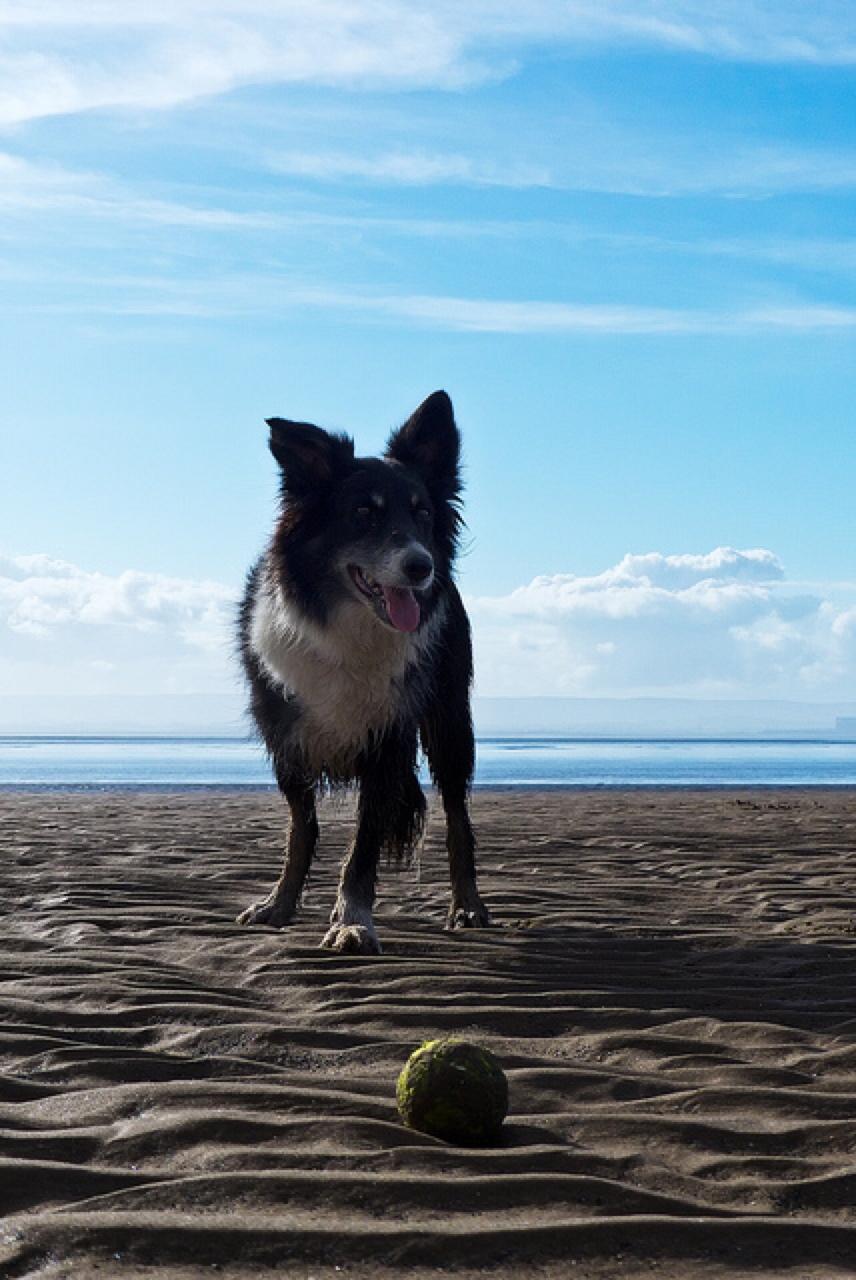 three legged dog special needs pet