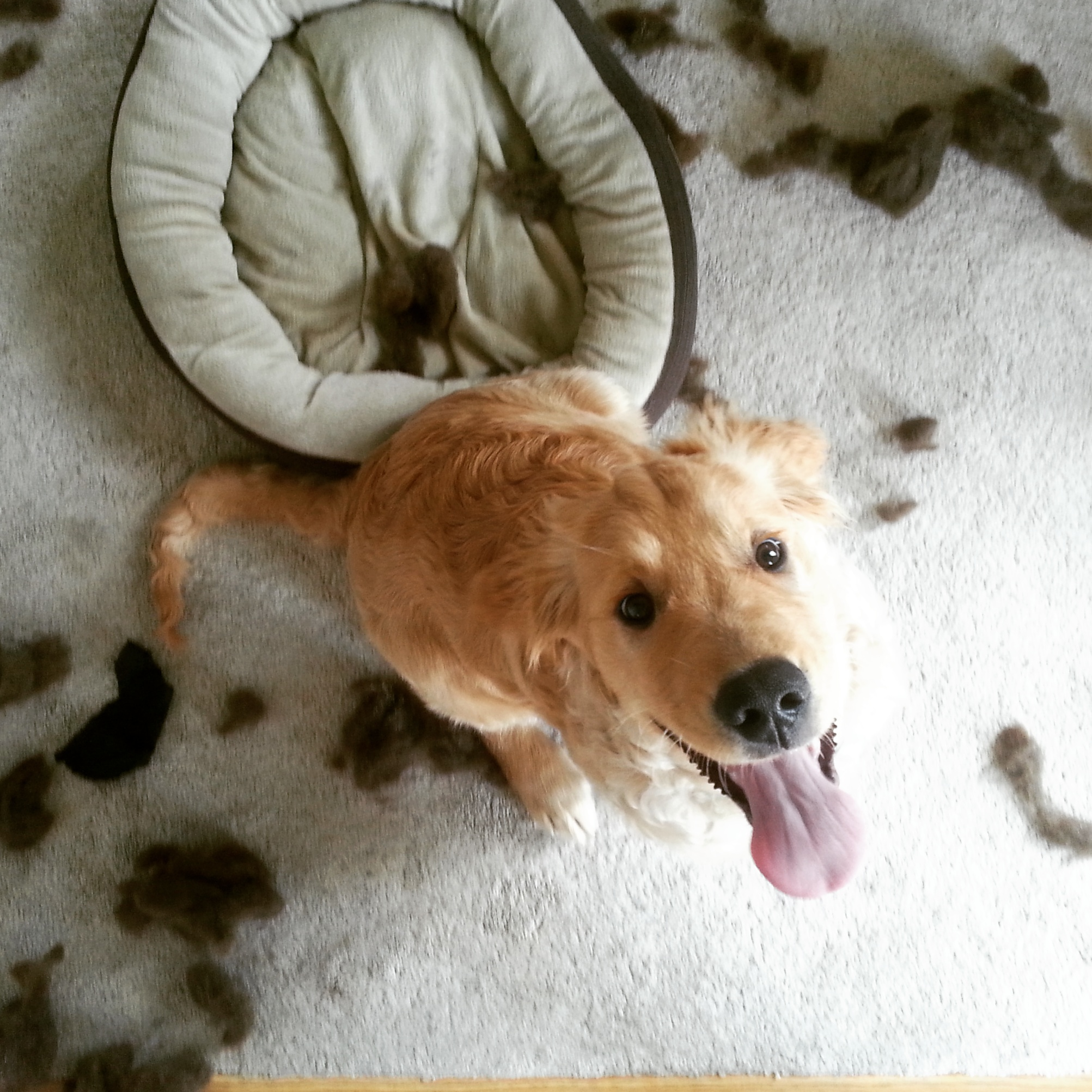 dog proof bed