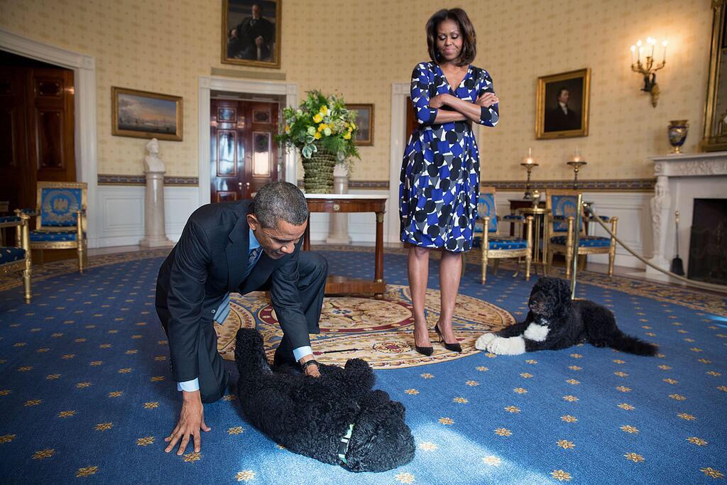 Obama Portuguese water dog
