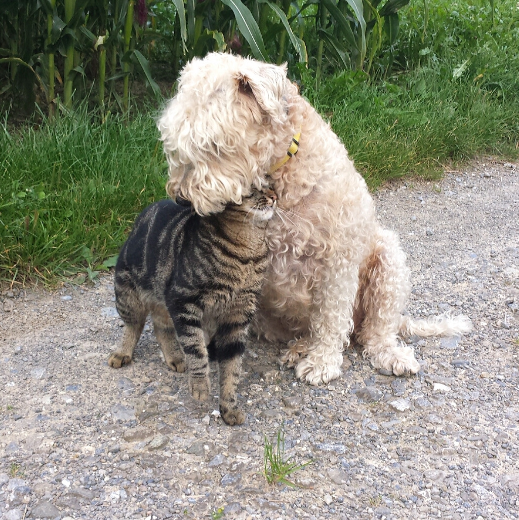 Helping Cats And Dogs Get Along