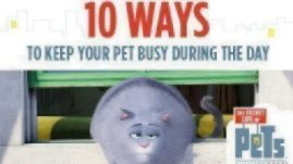 Keep-Pets-Busy-10-Ways