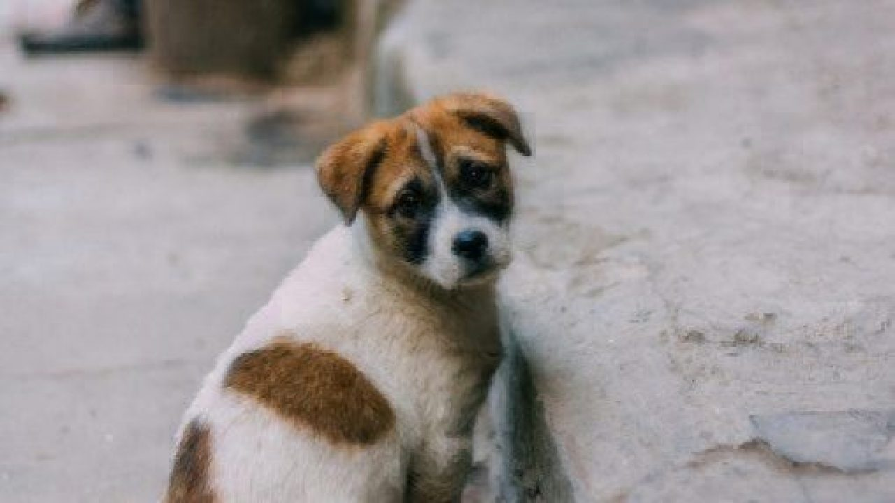 Heartworm In Puppies Healthy Paws