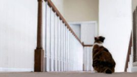 cat by stairs