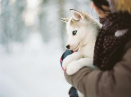 woman holding blue-eyed puppy